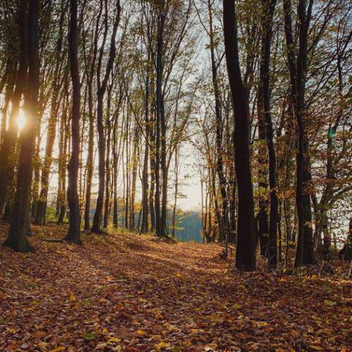 Bosques de Viena y Mayerling con SATO TOURS